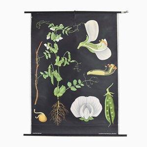 Botanisches Plakat von Jung, Koch, & Quentell für Hagemann, 1960er
