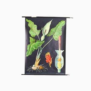 Poster botanico di Jung, Koch & Quentell per Hagemann, anni '60