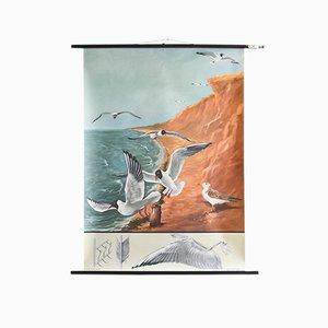 Charte Déroulante de la Mouette Mid-Century par Jung, Koch, & Quentell pour Hagemann, 1960s