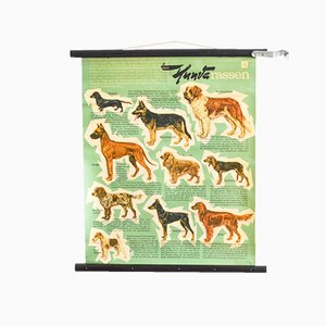 Ausziehbares Mid-Century Hunderassen Plakat von Hagemann, 1960er
