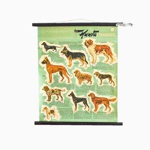 Mid-Century Roll Down Dog Breeds Chart from Hagemann, 1960s