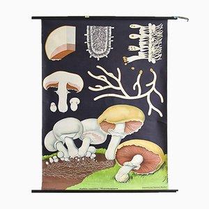 Mid-Century Schul-Schaubild mit Pilzen von Jung, Koch & Quentell für Hagemann, 1960er