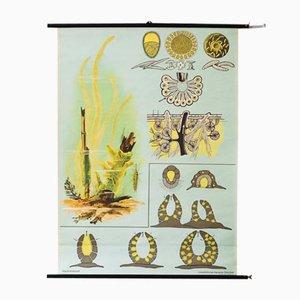 Póster escolar de la esponja Mid-Century de Jung, Koch & Quentell para Hagemann, años 70