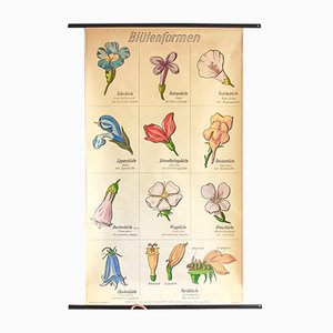 Botanical Wall Chart with Hand-Painted Flowers, 1960s