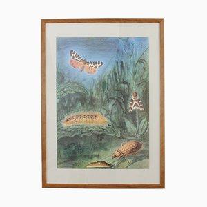 Poster educativo vintage raffigurante degli invertebrati di Antonín Altmann, anni '80