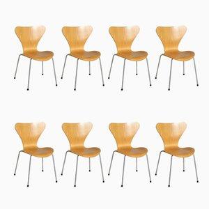 Chaises Modèle Seven en Hêtre avec Pieds en Acier par Arne Jacobsen pour Fritz Hansen, Set de 8