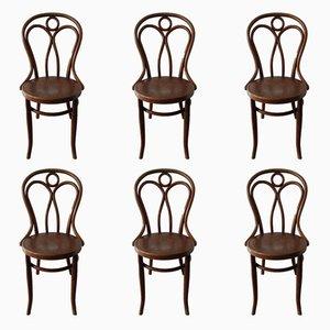 No 36 Esszimmerstühle von J & J Kohn, 1900er, 6er Set