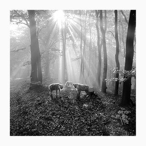 Tierwald#98 Pigmentdruck von Frank Machalowski, 2017