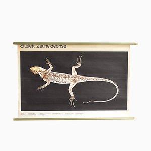 Póster escolar con lagarto, años 60