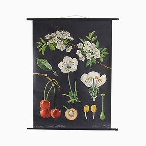Affiche Educative Botanique par Jung, Koch, & Quentell pour Hagemann, 1963