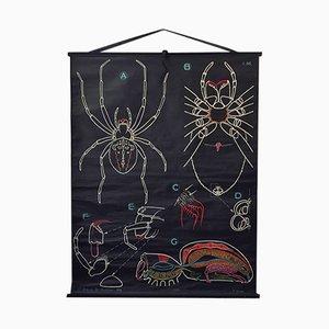 Poster vintage raffigurante un ragno di P. Sougy