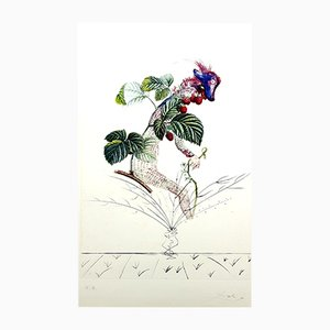Raspberry Lithograph by Salvador Dali, 1969