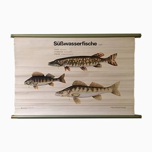 Vintage East German Educational Chart of Fresh Water Fish from Volk Und Wissen, 1960s