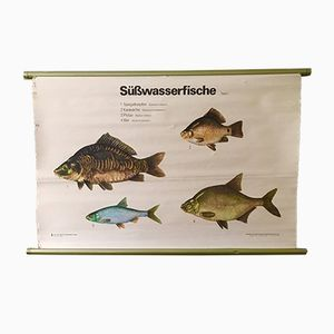 Vintage East German Educational Chart of Fresh Water Fish by Volk Und Wissen, 1960s