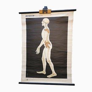 Vintage Human Skeleton Poster by Volk Und Wissen, 1960s