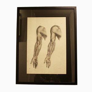 Antike Lithografie einer anatomischen Studie von Joseph Maclise für M & N Hanhart