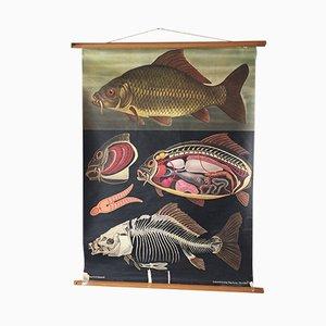 Affiche Scolaire Zoologique par Jung, Koch & Quentell