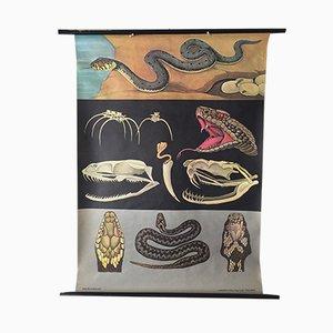 Charte Scolaire Murale Zoologique par Jung Koch Quentell pour Hagemann, 1972