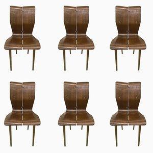 Geschwungene Esszimmerstühle aus Holz, 1950er, 6er Set
