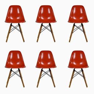 Mid-Century DSW Stühle aus Glasfaser von Charles & Ray Eames für Herman Miller, 6er Set