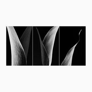 Triptychon-Fotografie von Cyrille Druart
