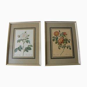 Impressions de Roses Botaniques Encadrées Vintage, Set de 2
