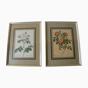 Vintage Framed Botanical Rose Prints, Set of 2