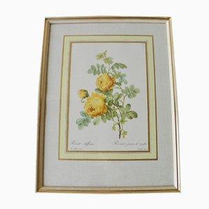 Póster de botánica vintage, años 60