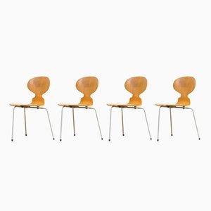 Modell 3100 Ant Stühle von Arne Jacobsen für Fritz Hansen, 1950er, 4er Set