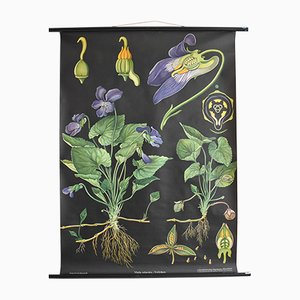 Póster escolar botánico vintage de Jung, Koch, & Quentell para Hagemann