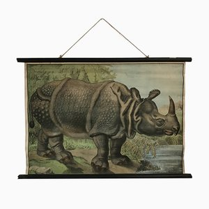 Educational Rhinoceros Poster, 1930s