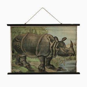 Póster escolar con rinoceronte, años 30