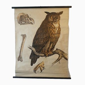 Owl Wall Chart Lithograph by Franz Engleder for J. F. Schreiber, 1893