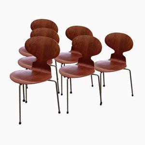 Dreibeinige Ant Stühle von Arne Jacobsen für Fritz Hansen, 1950er, 6er Set