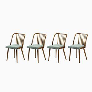 Vintage Stühle aus Bugholz von TON, 1960er, 4er Set