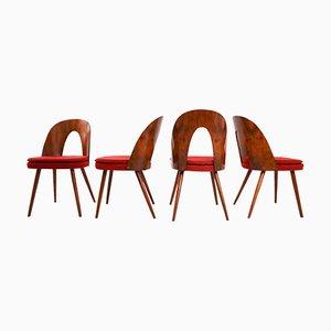 Chaises en Noyer par Antonin Suman pour Tatra, 1960s, Set de 4