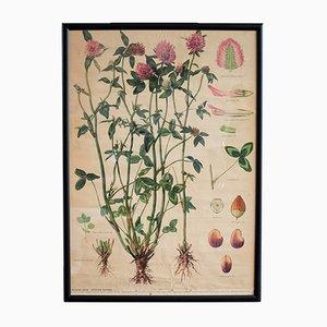 Poster botanico vintage di Jan Zikmund Melichar