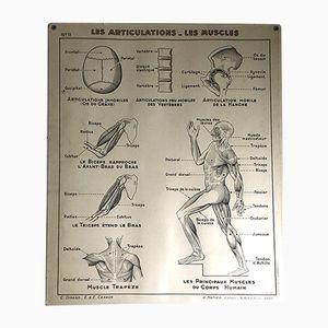 Affiche Scolaire Médicale Vintage, 1950s