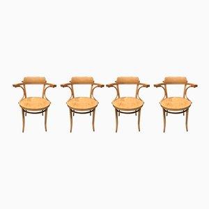 Chaises Norm Selection de Thonet, 1970s, Set of 4