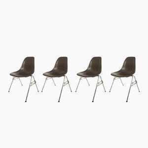 Vintage DSS Stühle aus Glasfaser von Charles & Ray Eames für Herman Miller, 4er Set