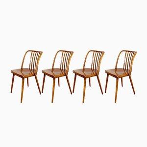 Dining Chairs by Antonín Šuman for TON, 1960s, Set of 4