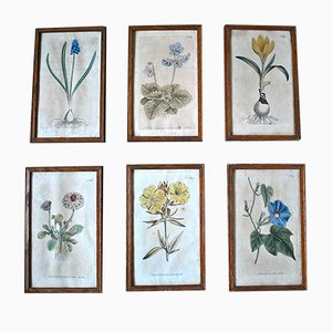 Hand Painted Copper Engravings by Curtis Botany, 1796, Set of 6