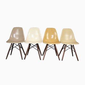 Chaises DSW Vintage par Charles & Ray Eames pour Herman Miller, Set de 4