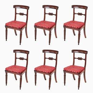 William IV Esszimmerstühle aus Palisander, 6er Set