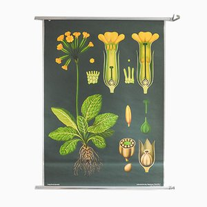 Vintage Illustrated Botanical School Poster from Hagemann