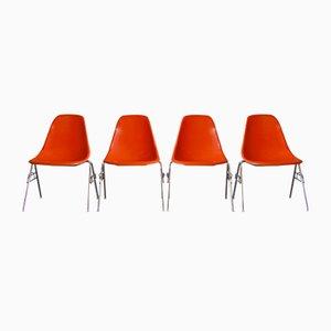 DSS Stühle mit Sitzschale aus Glasfaser von Charles & Ray Eames für Herman Miller, 1976, 6er Set