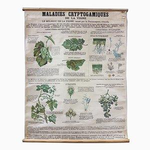 Poster botanico vintage