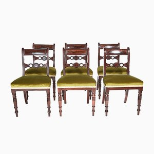 Antike Regency Esszimmerstühle aus Mahagoni, 6er Set