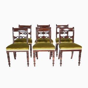 Sedie da pranzo Regency antiche in mogano, set di 6