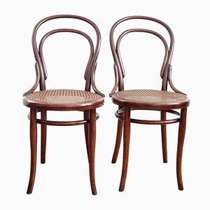 Antiker Modell 14 Stuhl aus Bugholz von Thonet, 2er Set